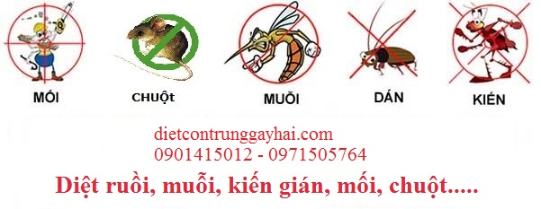 diet-con-trung-dinh-ky