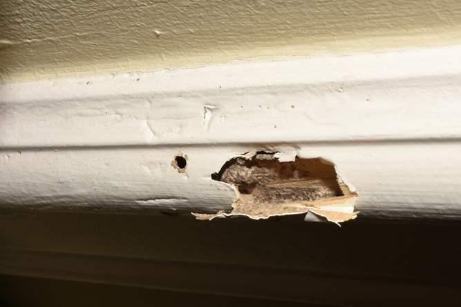 5 Dấu hiệu cho thấy mối đã tấn công nhà bạn