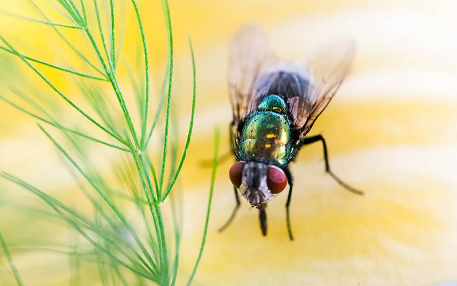 10 Điều bí ẩn về ruồi mà bạn chưa biết