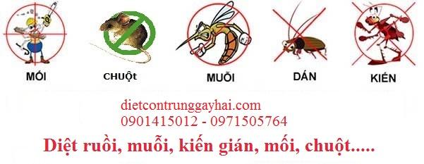 Công tác phòng ngừa ngăn chặn dịch hại tại TPHCM
