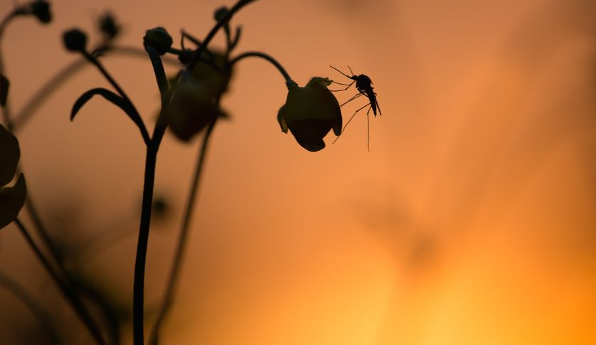 Những Lợi Ích Của Muỗi Với Con Người Và Hệ Sinh Thái