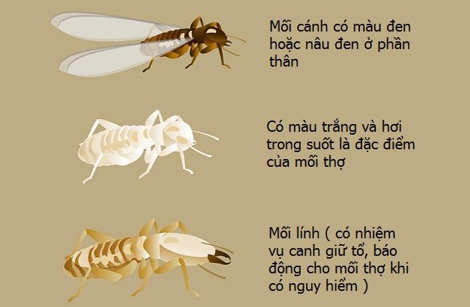 moi-trong-nhu-the-nao