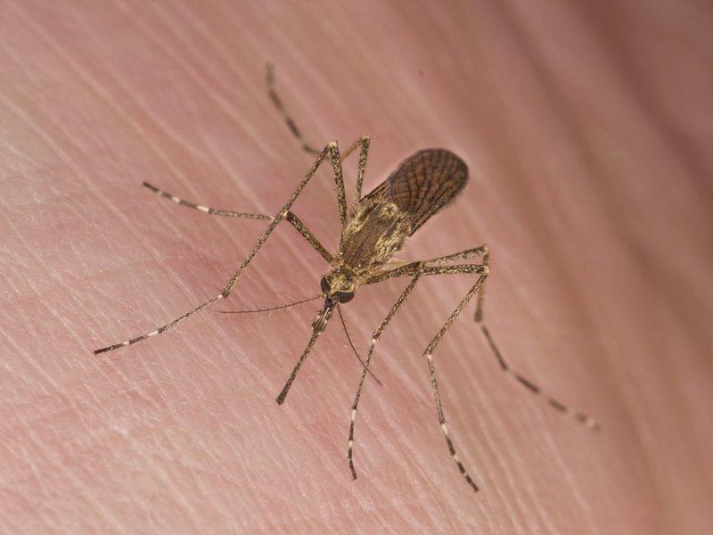 Lý do vì sao bạn luôn bị muỗi đốt nhiều hơn người khác