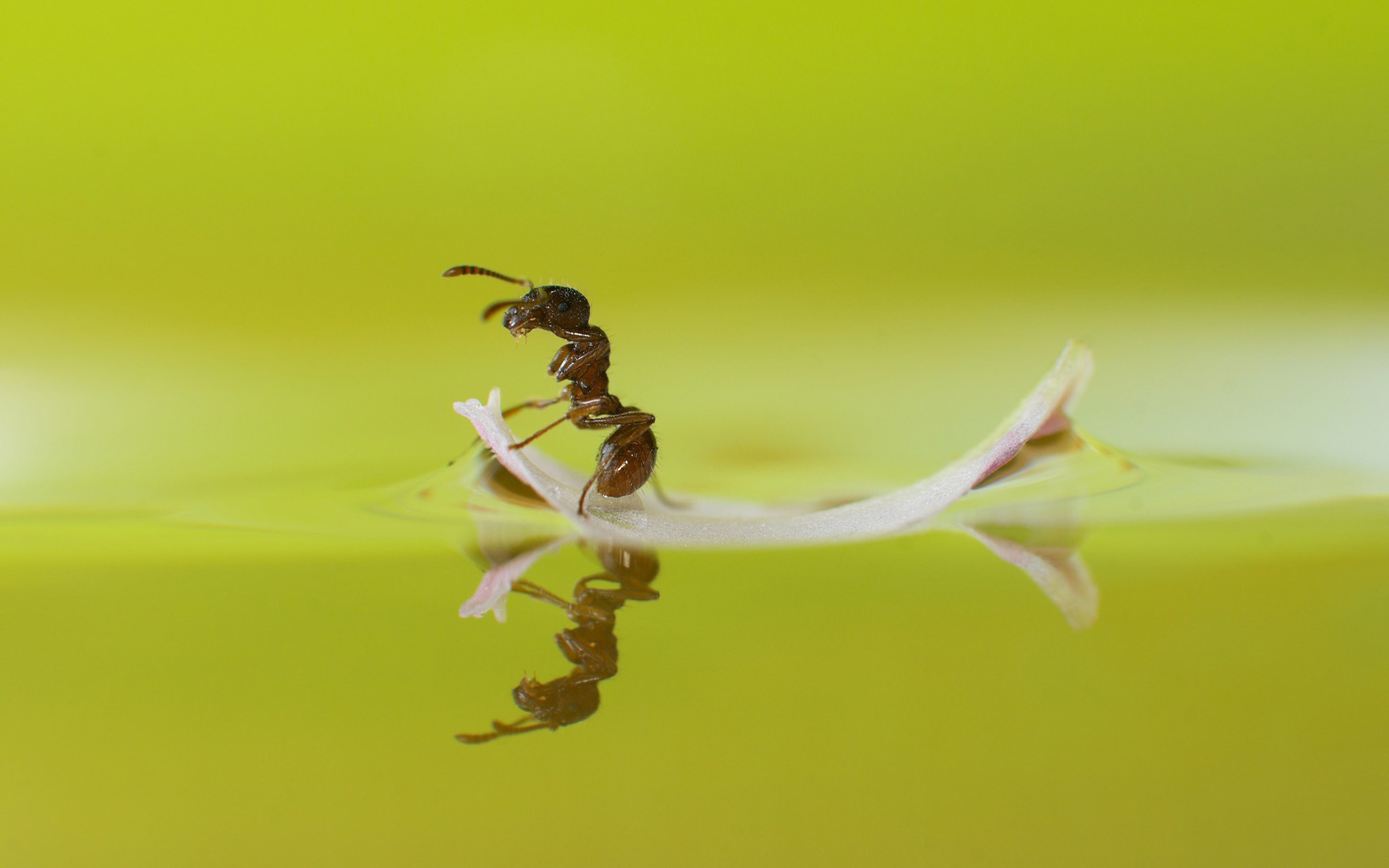 63470484-ant-wallpapers