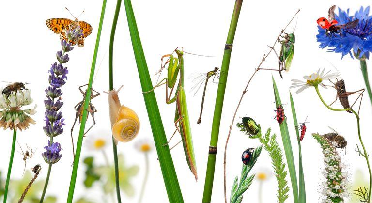 Côn trùng và 10 sự thật thú vị – Thế giới côn trùng