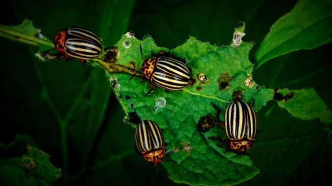 insect-find-their-plant
