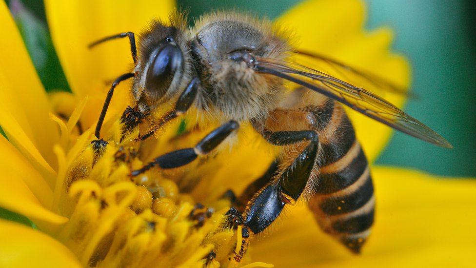 Khám phá những điều bí ẩn ở loài ong
