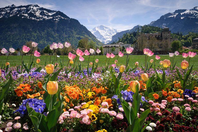 12 Cách giúp thu hút ong bản địa làm tổ và sinh sản trong vườn