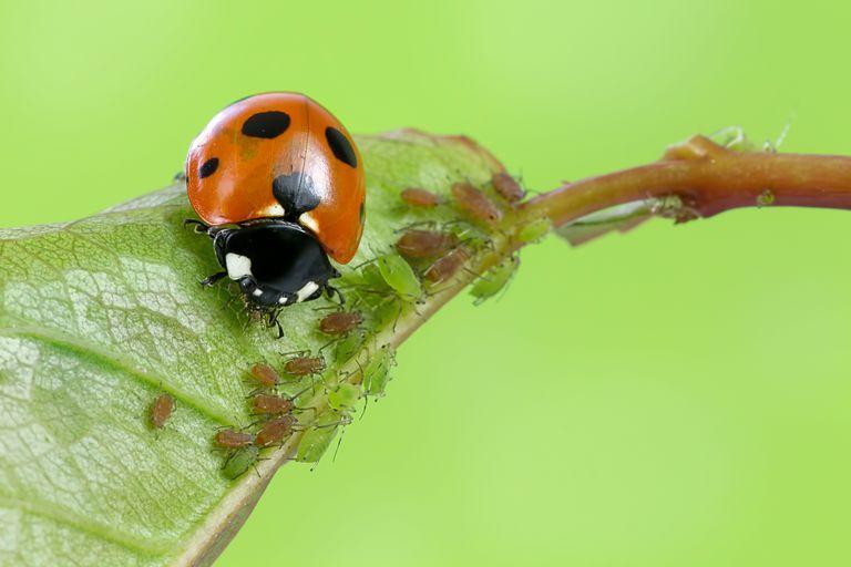 Làm thế nào để thu hút côn trùng có lợi vào vườn nhà ?