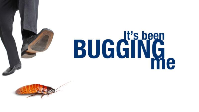 Một vài lý do tại sao bạn không nên cố gắng tiêu diệt côn trùng