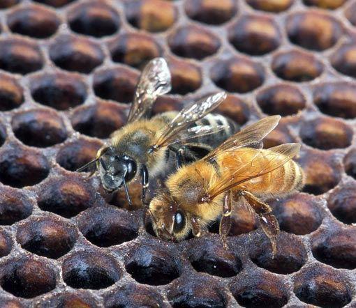 killer-bee-1355020-56a51f4d5f9b58b7d0daedba