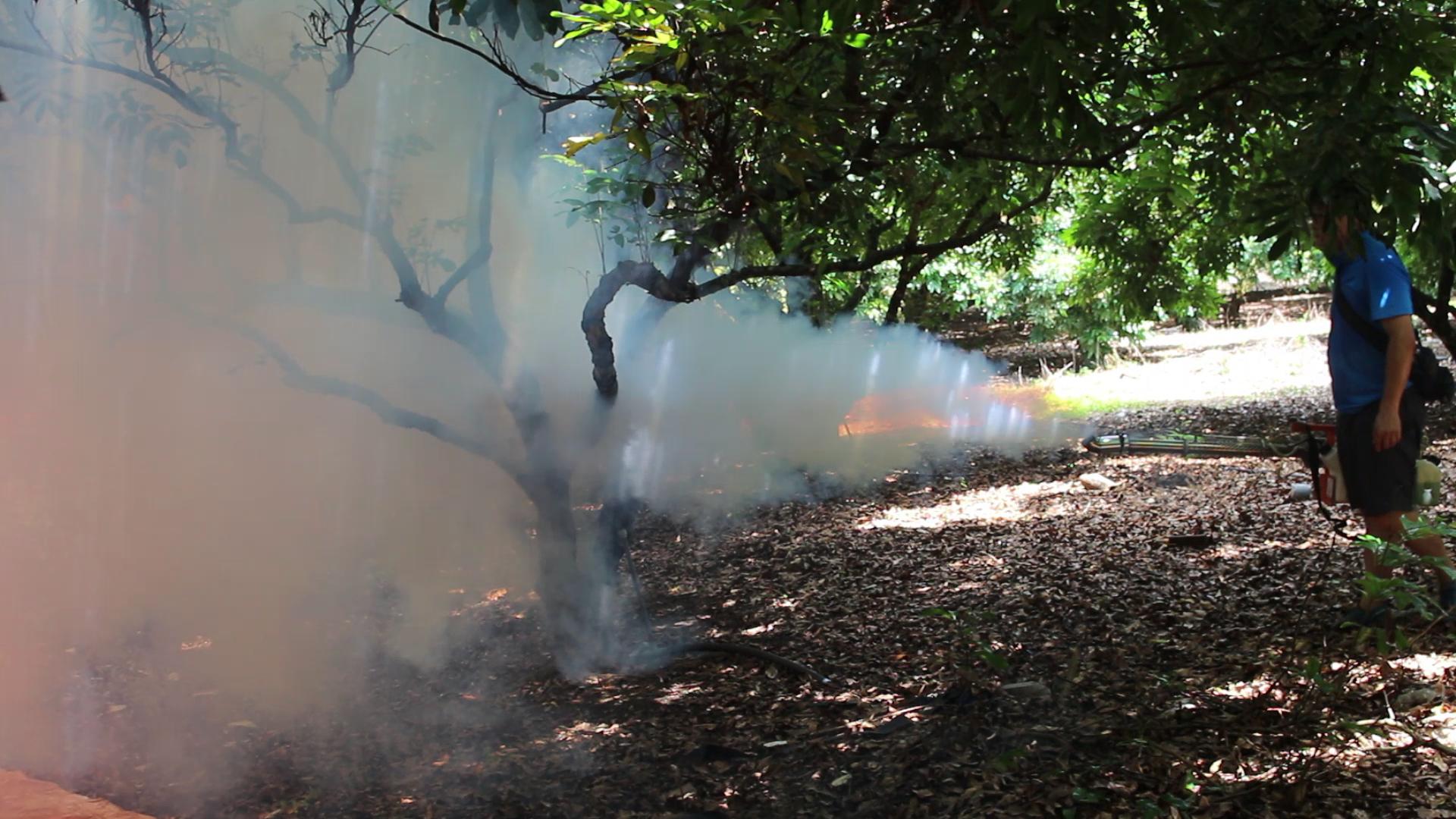 Phun sương hay phun khói mù nhiệt để diệt muỗi ? Cách nào hiệu quả?