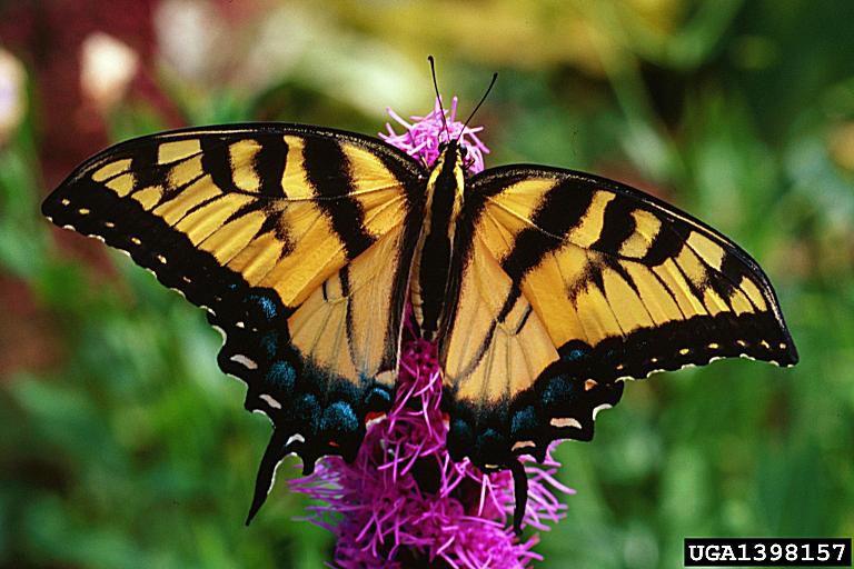 Danh sách biểu tượng côn trùng của 50 tiểu bang Hòa Kỳ