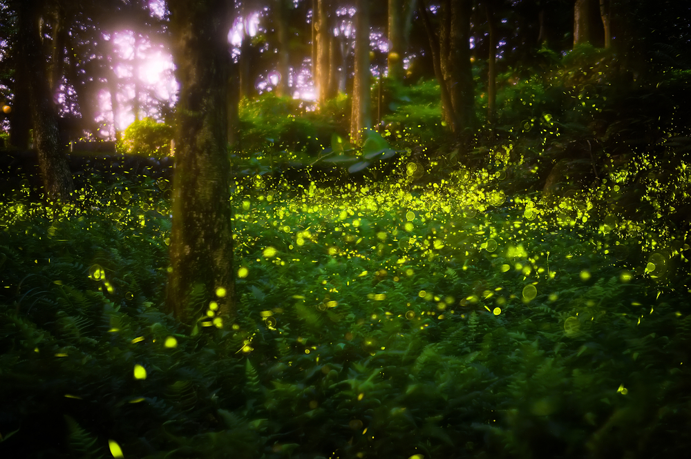 Elkmont-fireflies-shining-in-the-Great-Smoky-Mountains
