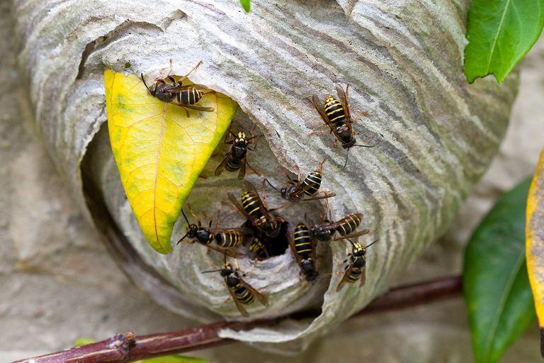 Lợi ích của loài ong trong tự nhiên