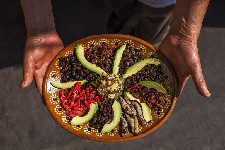 edible-insects-prepared-by-a-mexican-chef-652121582-58d29e355f9b584683b10281