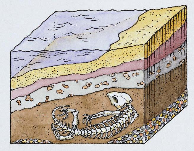fossilform2