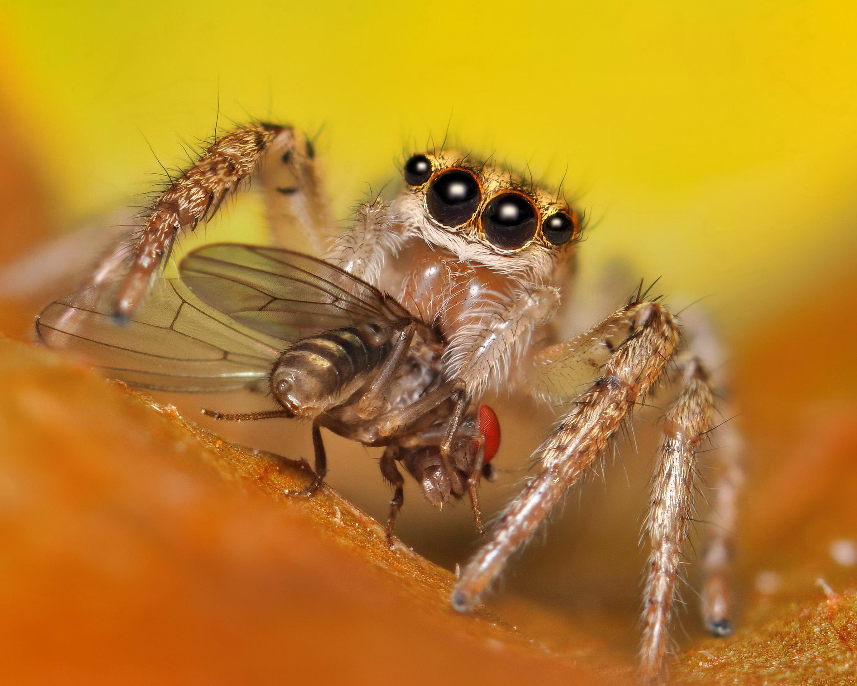 Nhện ăn 880 triệu tấn côn trùng mỗi năm