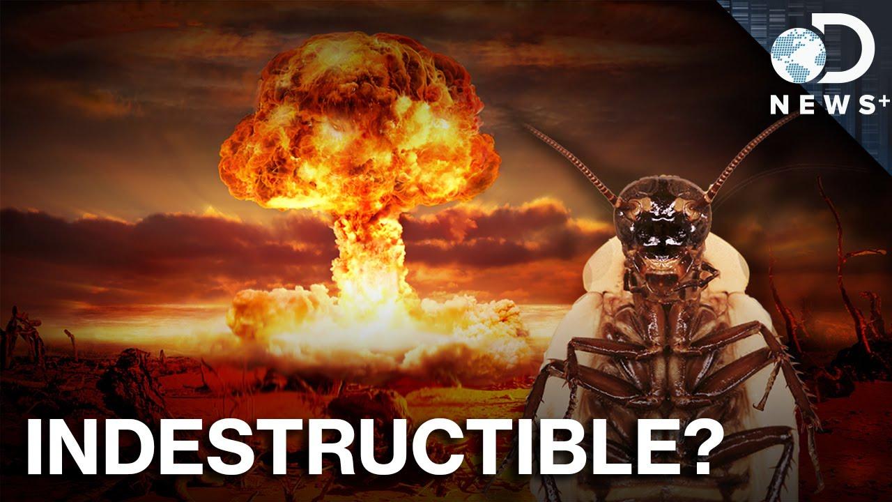 Gián có thể sống sót sau một vụ nổ bom nguyên tử ?