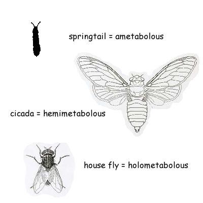 Các kiểu biến thái của côn trùng