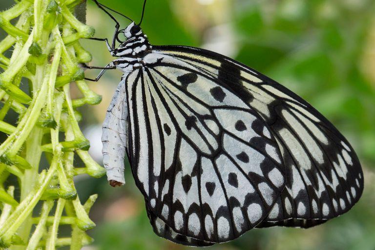 Butterfly-58c9b6995f9b581d72f7e347