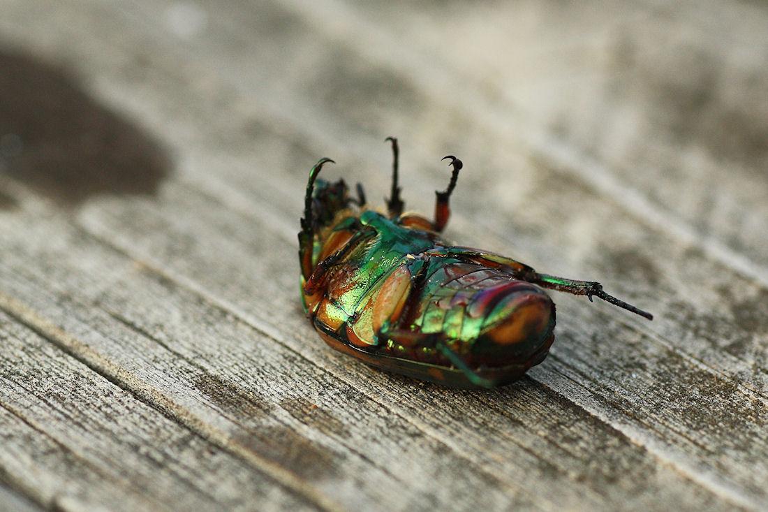 Trong tương lai, côn trùng sẽ biến mất khỏi hành tinh ?