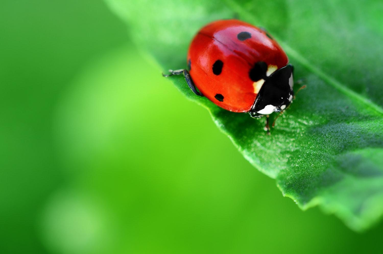 Những loài côn trùng có lợi trong vườn nhà bạn