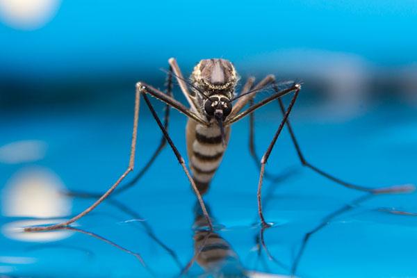 côn-trùng-sống-ở-dưới-nước