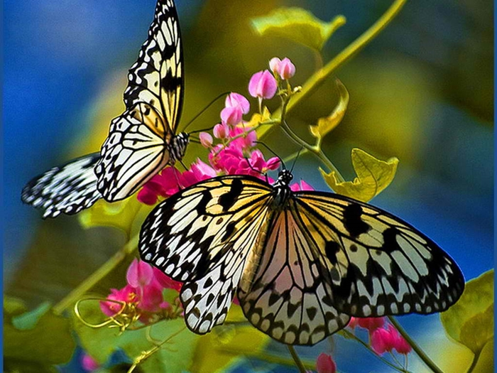 sự-phát-triển-của-loài-bướm