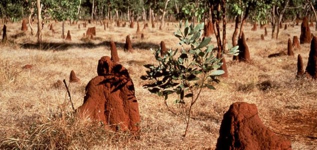 termite-mounds-helps-against-desertification