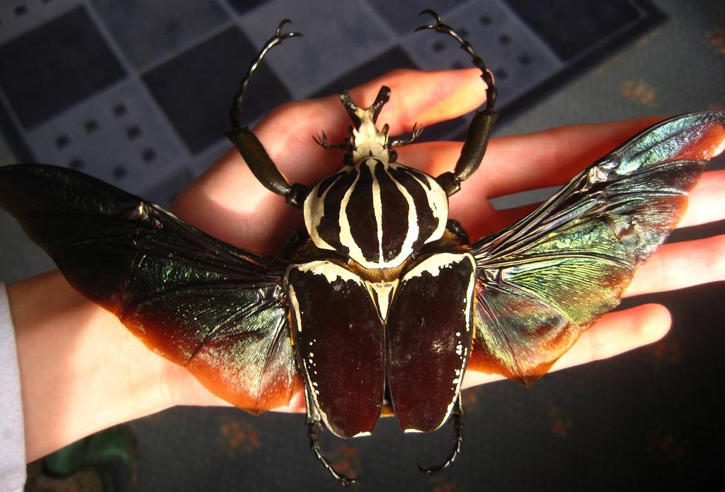 10 Sự thật thú vị về Bọ cánh cứng