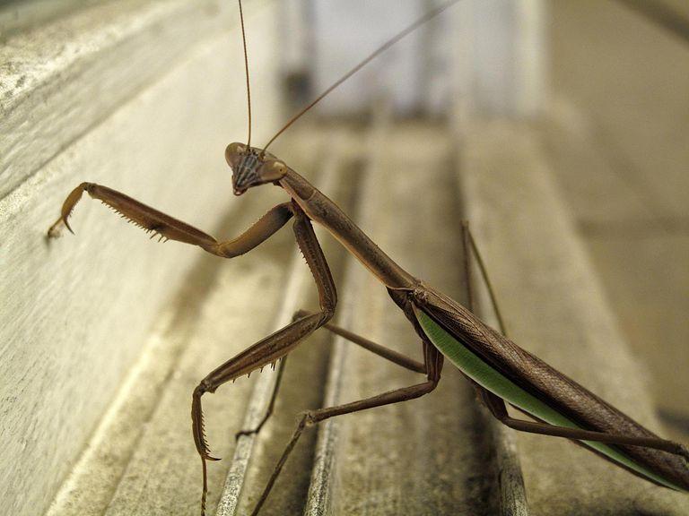côn-trùng-là-gì