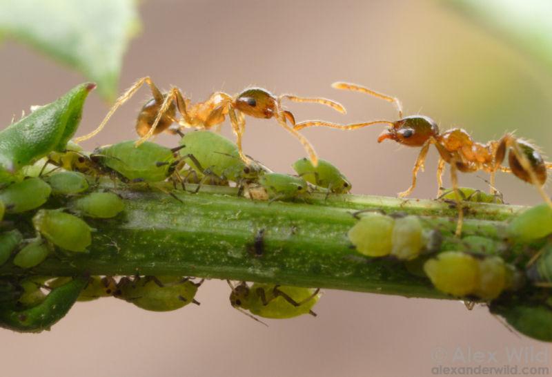 10 Sự thật thú vị về rệp vừng