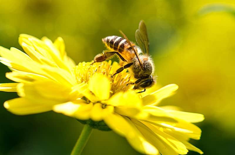 Ong mật có sản xuất mật ong vào mùa đông ?
