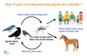 sot-west-nile