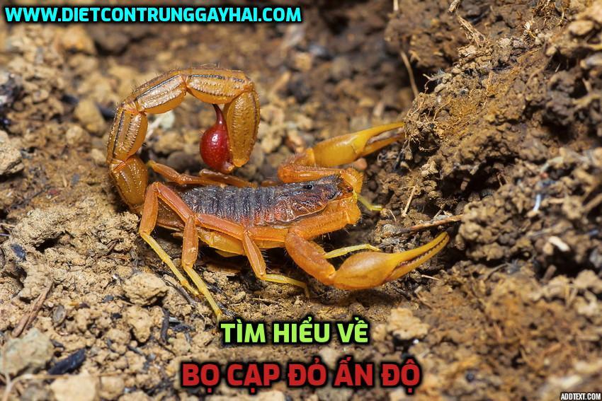 bo-cap-do-an-do