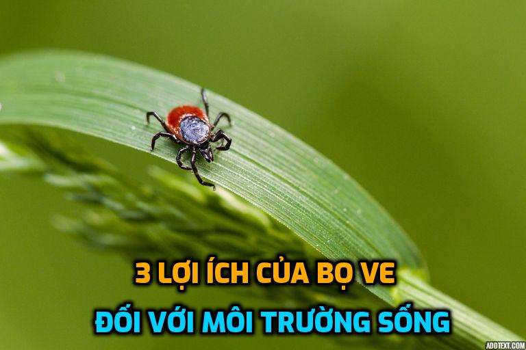 3-loi-ich-cua-bo-ve