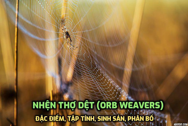 nhen-tho-det-qua-cau-araneidae
