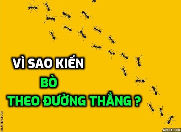 vi-sao-kien-di-thang-hang