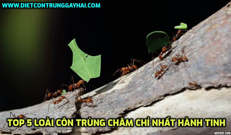 5-loai-con-trung-cham-chi-nhat-hanh-tinh