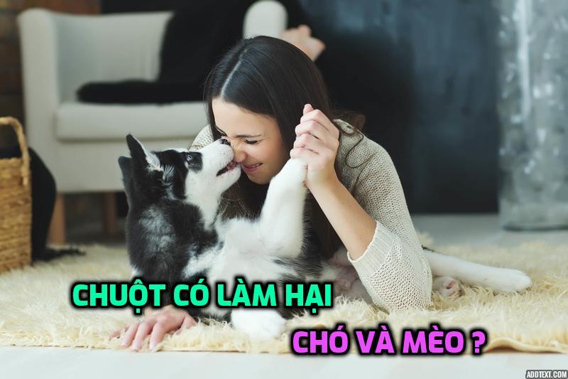 chuot-co-lam-hai-cho-va-meo