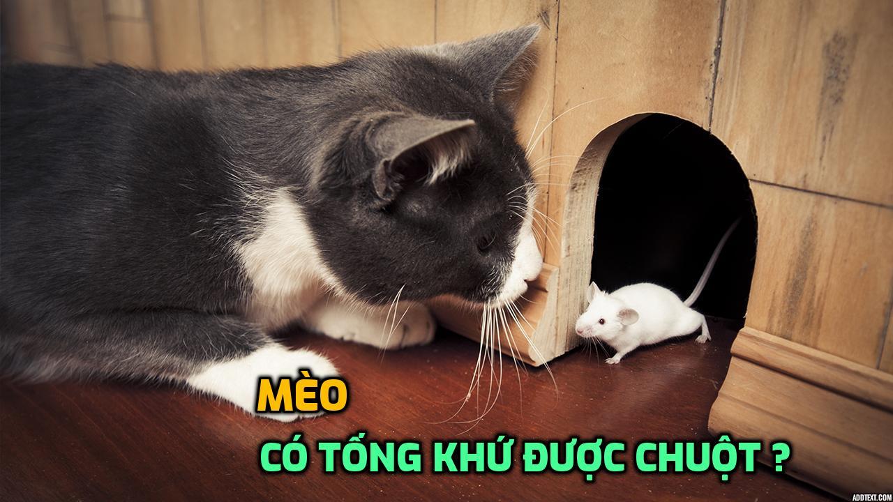meo-co-tong-khu-duoc-chuot