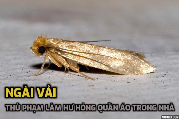 ngai-vai-thu-pham-lam-hu-hong-quan-ao-trong-nha