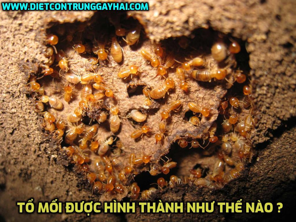 to-moi-duoc-hinh-thanh-nhu-the-nao