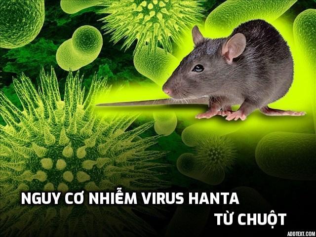 nguy-co-nhiem-virus-hanta-tu-vet-can-cua-chuot