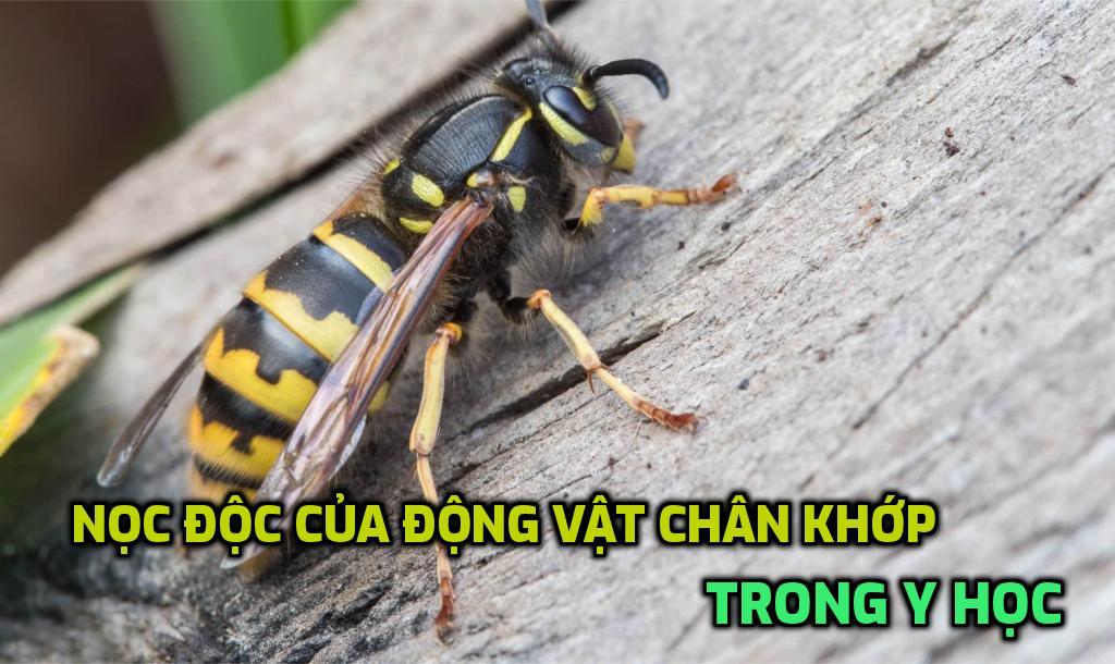 noc-doc-cua-dong-vat-chan-khop-trong-y-hoc