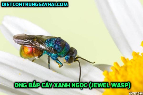 ong-bap-cay-xanh-ngoc-jewel-wasp
