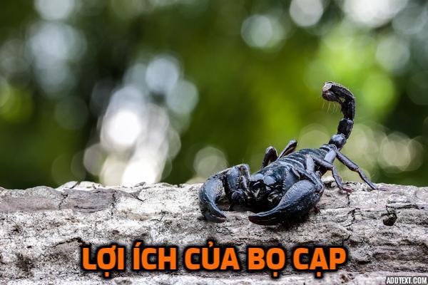 loi-ich-cua-bo-cap-trong-y-hoc